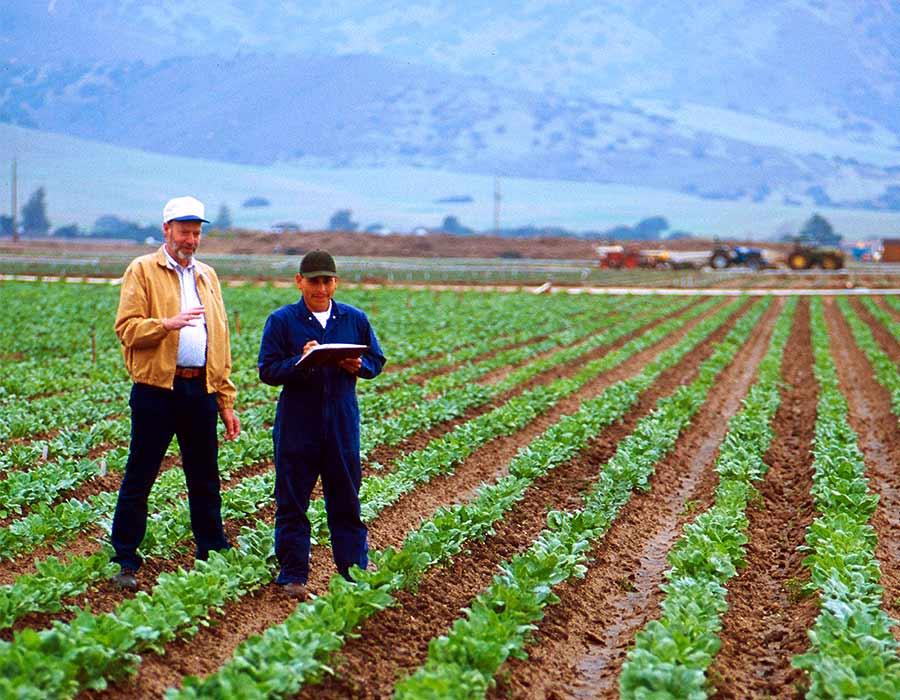 Planes integrales de sanidad vegetal