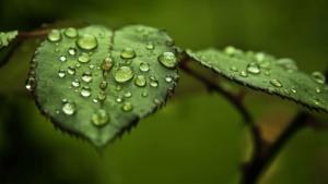 Capturando Agua de Lluvia